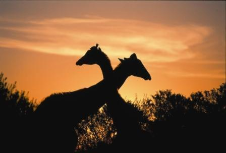 temba-game-reserve-grahamstown-accommodation-29